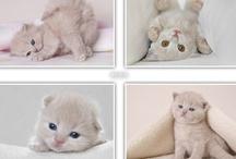 I'm a cat person  =^.^=