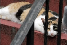 Feral, Stray & Community Cats