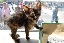 Pet Adoption Events
