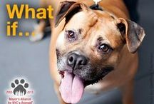 """25,000 Facebook Fans x $10 Campaign / The Mayor's Alliance for NYC's Animals reached 25,000 """"likes"""" on Facebook on August 28, 2013! What if each of our fans donated just $10 to help us save the lives of even more homeless pets in NYC this year? You in? Donate: https://donatenow.networkforgood.org/MayorsAllianceNYC?code=25KFBPet"""