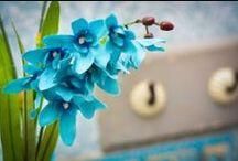 Cor Azul / A cor da tranquilidade, paz e sossego