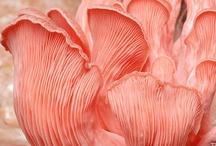 I ♥ Coral