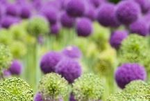 I ♥ Purple & Green