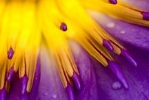 I ♥ Yellow & Purple