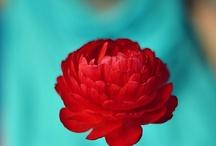 I ♥ Red & Aqua/Teal