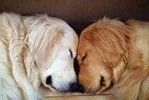 Pets / Essas criaturas adoráveis que eu amo tanto. Eles são demais!