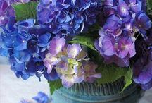 flores para enfeitar a vida