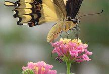 Beautiful Butterfly's