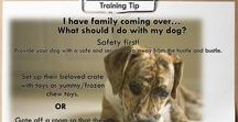 Dog Training Tips / Quick and easy dog training tips for every type of pet parent.