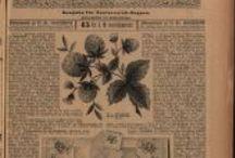 Österr. Wäschezeitung, ab Januar 1894