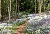 Countryside beauty