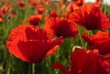 Red Flowers / Rode Bloemen / by Esther Damen