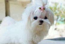 Estilosinhos / Os cachorrinhos mais fofos do Pinterest :) / de Petite Sofie
