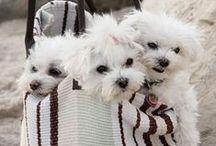 Bolsas Pet / Exemplos de estilosas formas de levar seu pet. / de Petite Sofie