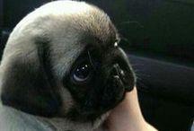 Pet-lícia! / Felicidade misturado com pet é uma delícia, não, uma PET-LÍCIA! :) / de Petite Sofie