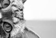 Cats Black&White