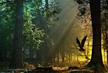 The beauty of Nature / #photography #nature #beautiful #theworld