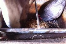 Paarden / onze paarden/pony's die we rijden, mennen en in hulpverlening gebruiken.