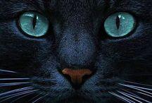 Cats / Fotos e desenhos