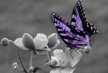 Passionate Purple / Purple... the color of Emo's when mixed with black, its a Royal color and Violets cherish its texture