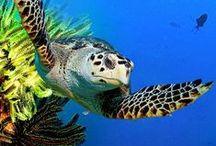 Not so ninja Turtles