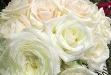 White Theme / Bridal bouquet and wedding floral decoration in a white theme