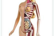 goooooooood anatomy