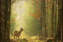 Magic Places *-*