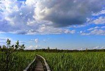 "Poleski Park Narodowy / Poleski Park Narodowy, niezwykłe krajobrazy, piękne zdjęcia, cisza spokój, ""Polesia czar"" Polesie National Park , extraordinary landscapes, beautiful pictures , peace , "" Polesie spell """