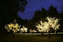 Lighting ideas / Beautifully realistic LED blossom trees for your home or garden.
