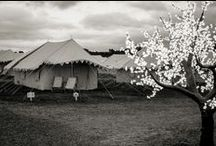Festival Fun & Amazing Events! / See who's celebrated with our trees for hire at festivals and events around the country.