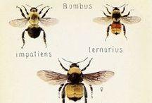 Bee Fun / by Bee Thinking