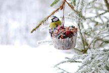 DIY | Vogelhäuser / DIY Vogelfutter für den Winter