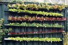 Urban Farming / by Bee Thinking