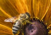 Bee-Friendly Plants / by Bee Thinking