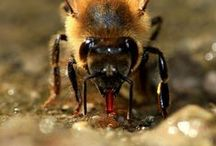 Bee Biology / by Bee Thinking