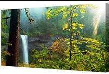 Forest / Forest canvas art prints, available in a range of canvas sizes.