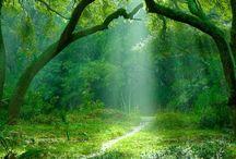 Yggdrasil / ユグドラシル、木、樹、自然、葉、神話、tree、森の中、Ebineyland