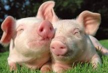Piglets / To celebrate my beloved dog - Piglet - and my fondness of pigs, here are some cool / nice / weird things relating to piggies :)