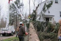 Tree Removal / Barts Tree Service removing trees