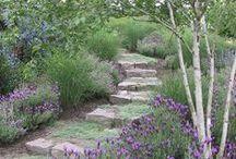 gardening and outdoor stuff