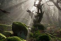 Arbres, Nature et Forêts