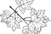 KIFESTŐK (ősz) - COLORINGS (autumn)