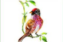 Bunte Vögel in Aquarell / Schöne Vogelbilder gemalt von Edelart für Robert C. Klotz - Vogelhäuser.