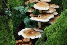 ferns/lichen/moss/mushrooms  ✿