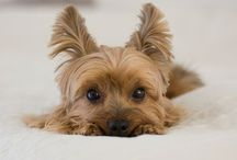 Dogs / These are some cute little dogs and puppies hope you enjoy saying how cute the look!