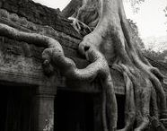 Beth Moon - ancient trees ༺ ♥ ༻ / Beth Moon, a photographer based in San Francisco, has been searching for the world's oldest trees for the past 14 years. She has traveled all around the globe to capture the most magnificent trees that grow in remote locations and look as old as the world itself.