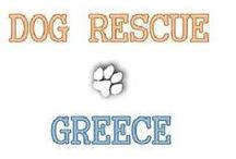 Dog rescue Greece / Here you'll find things about the foundation dog rescue Greece. www.thelittlethingsinlife.nl supports this foundation with a beautiful product you can find in the webshop. www.dogrescuegreece.nl