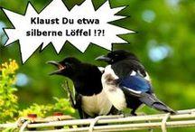 Ehepaar Elster - Vogelcomic in 6 Bildern / Ehepaar Elster verbringt einen ruhigen Nachmittag - doch dann wird es turbulent. Klauen Elstern wirklich silberne Löffel?