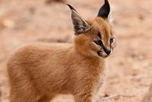 animals - creatures of God  ✿